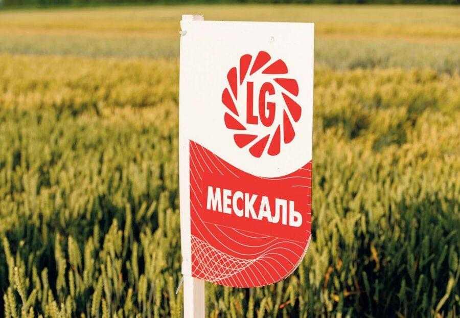 Пшениця озима, сорт Мескаль