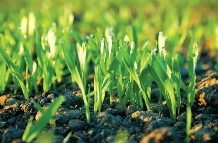 Як застрахувати посіви від складної осені?