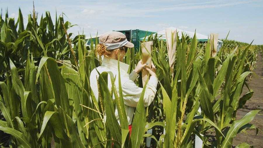 Corteva Agriscience відкриває новий комплексний дослідницький центр з вивчення сільськогосподарських культур