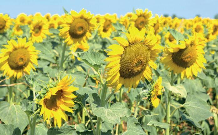 Інноваційний проєкт «Сильна молода рослина» від компанії «Євраліс»