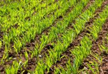 Стимуляція росту на етапах проростання насіння — перший крок до кращих результатів