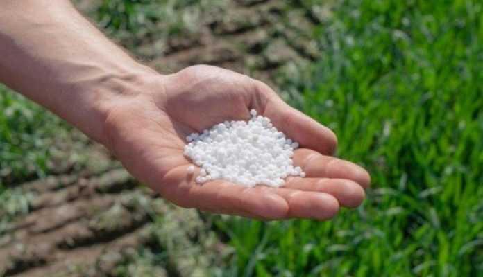 Підживлення озимої пшениці фосфором та калієм перед сівбою