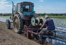 На Одещині фермер збільшив врожаї суниці вдвічі завдяки німецькій технології