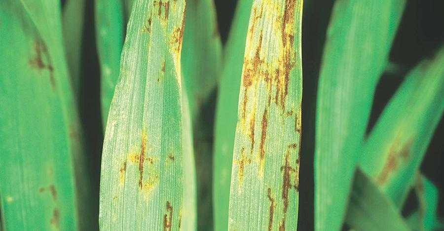 Резистентність грибів патогенів рослин3