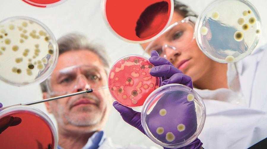 Резистентність грибів патогенів рослин4