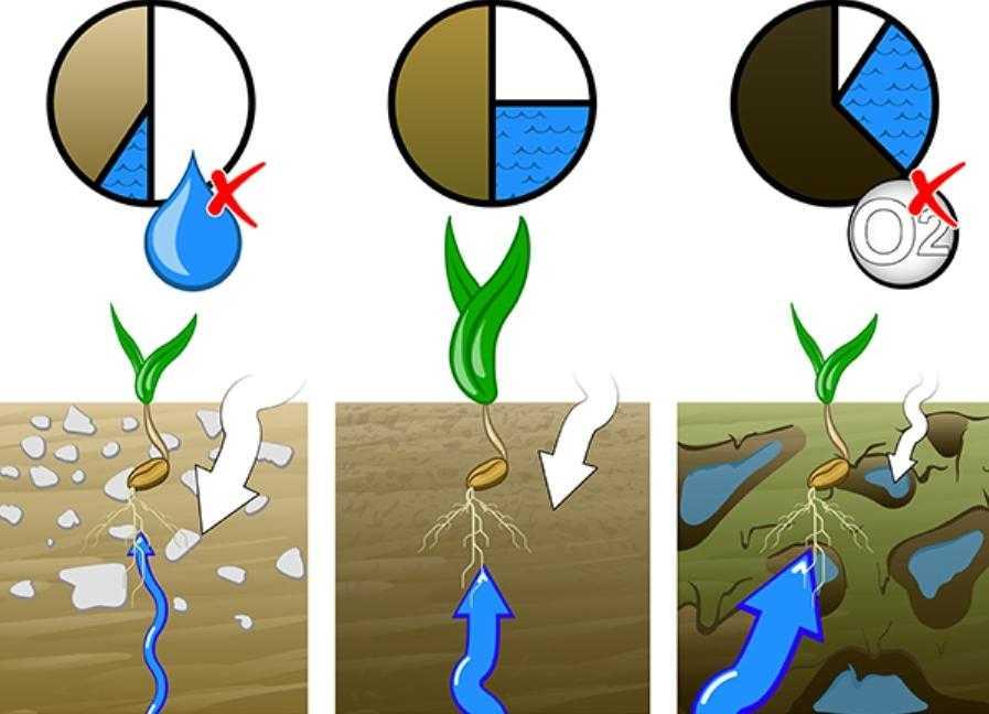Як щільність грунту впливає на урожайність с.-г. культур