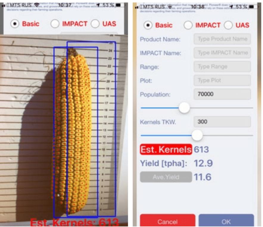 Аграрії тепер можуть оцінити біологічну урожайність кукурудзи за допомогою мобільного телефону