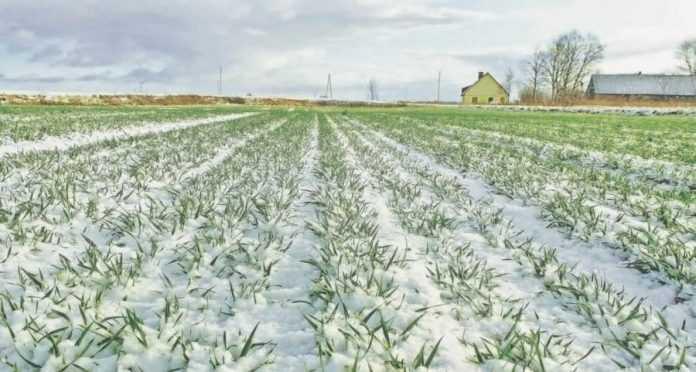 Аграріям варто готуватися до аномально теплої і сухої зими - кліматологи