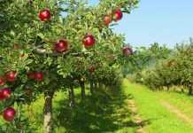 Фактори, які впливають на морозостійкість садів
