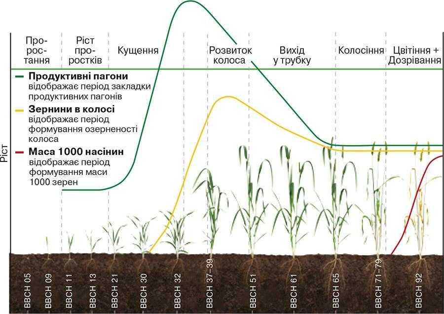 Рис. 1. Формування врожаю зернових культур