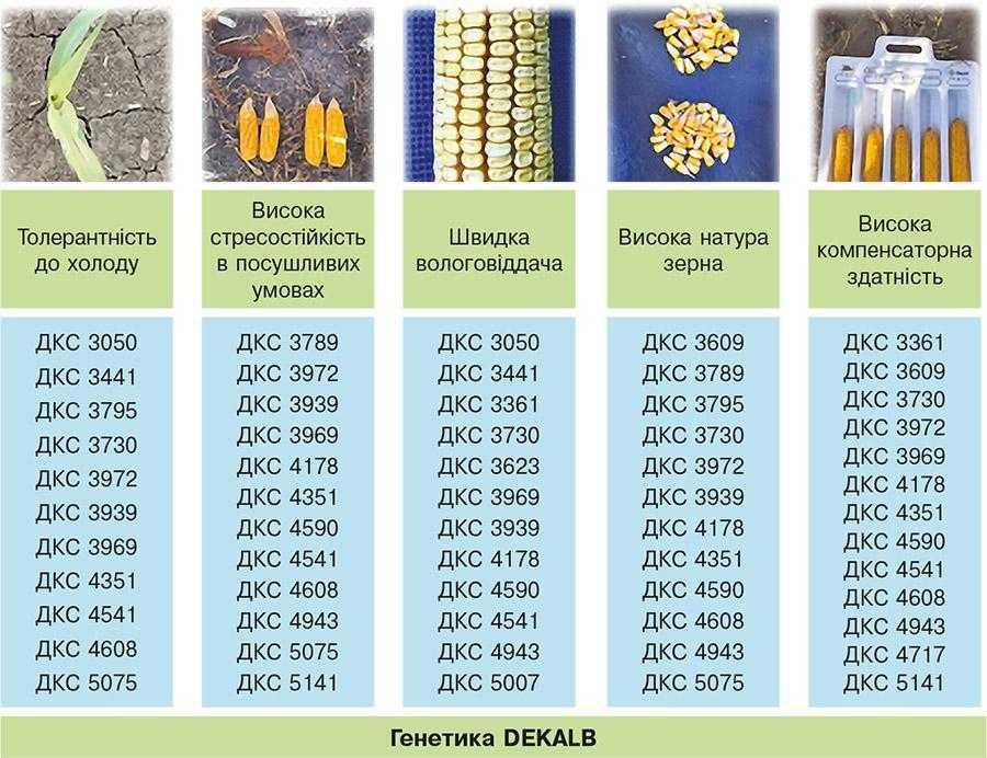 Рис. 10. Важливі складові генетики DEKALB