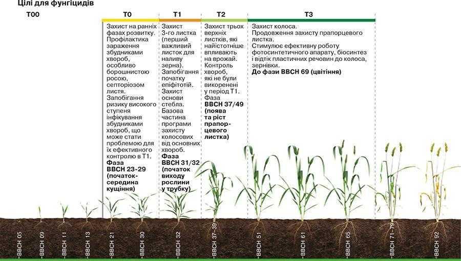 Рис. 8. Період росту і розвитку озимих зернових та час обробки фунгіцидами