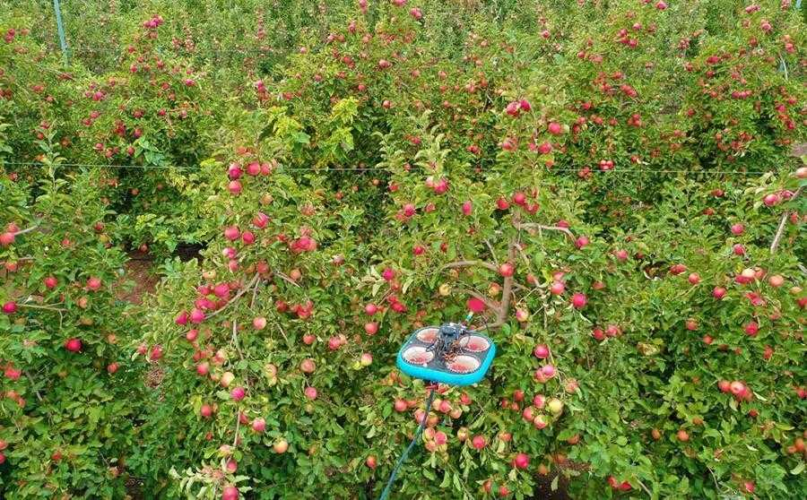 Tevel Aerobotics Technologies розробила літаючих роботів для збору фруктів (3)
