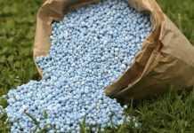 Як правильно розрахувати кількість фосфору в системі живлення культур