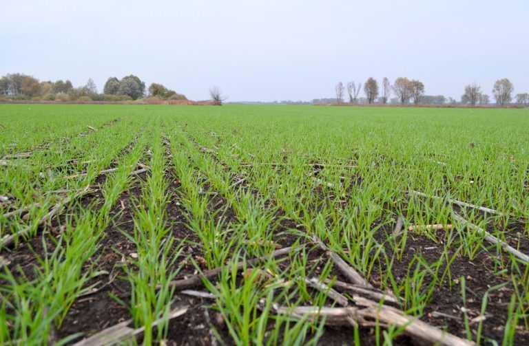 Вплив строку сівби на витрати поживних речовин пшеницею