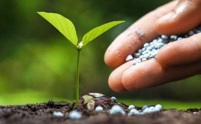 Фосфор можна зробити доступнішим для с.-г. культур