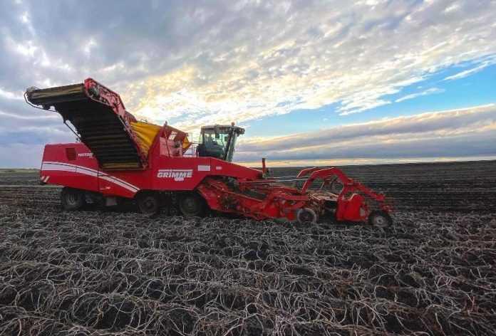 Контінентал Фармерз Груп зібрав високий урожай пізніх зернових культур