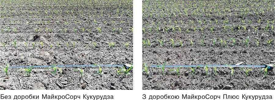 Рис.1. Вплив доробки насіння МайкроСорч Плюс Кукурудза (2,4 кг_т) нарівномірність розміщення рослин кукурудзи