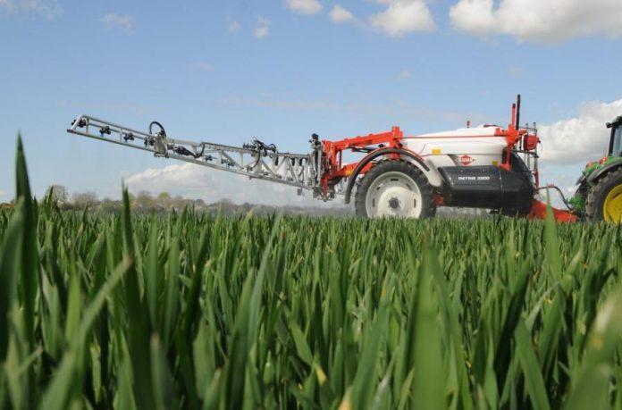 Сірка підвищує урожайність озимої пшениці у посушливі роки