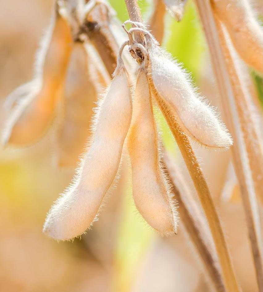 Вплив систем удобрення на формування врожайності та якості зерна сої-3