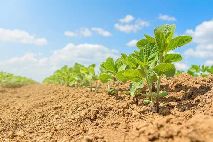 Вплив систем удобрення на формування врожайності та якості зерна сої