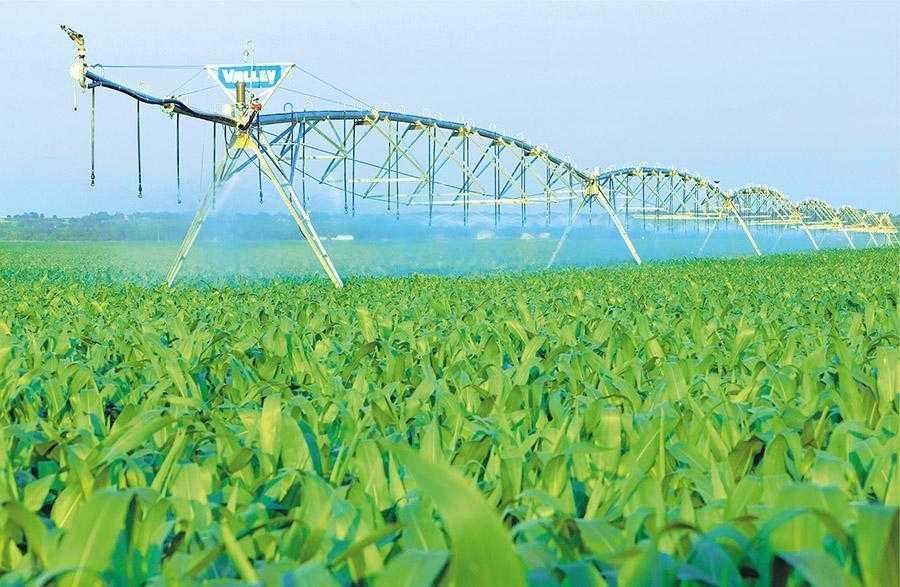 Вже п'ятий рік в господарстві на поливі вирощують гібридну кукурудзу на насіння. В цьому році до неї приєднались також товарні посіви сої та озимої пшениці