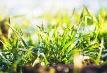 Як отримати 10 ц прибавки врожаю на пшениці озимій