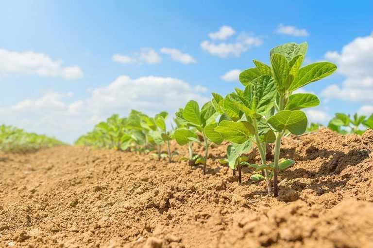 Вплив систем удобрення на формування врожайності зерна сої