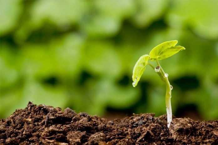 Агрономічні правила для здорового грунту