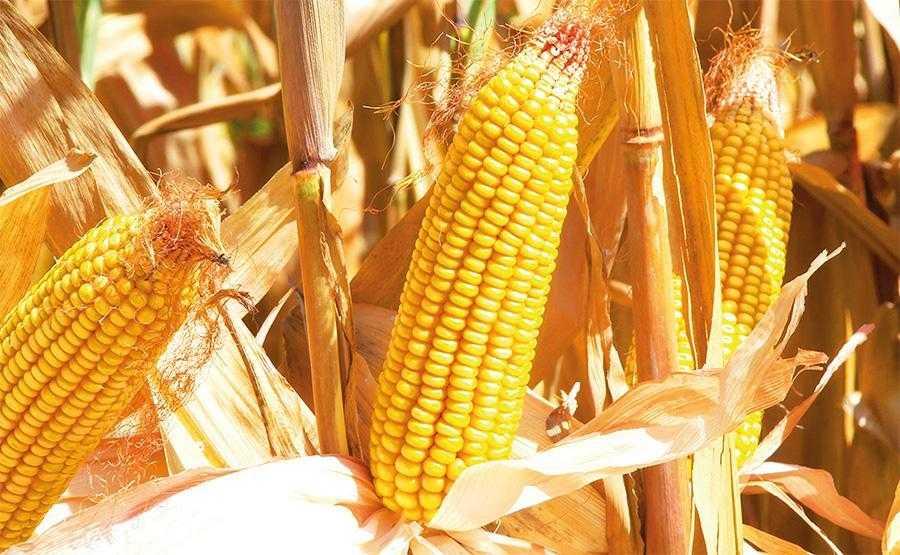 Чи можна збільшити урожайність-3