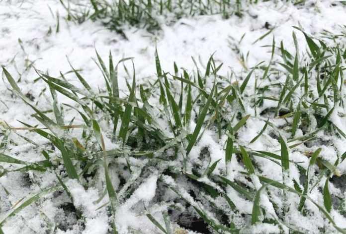Фітосанітарний стан посівів на 1 лютого