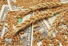 Нова програма ALFA Smart Agro захищає від ризику зміни ціни на врожай