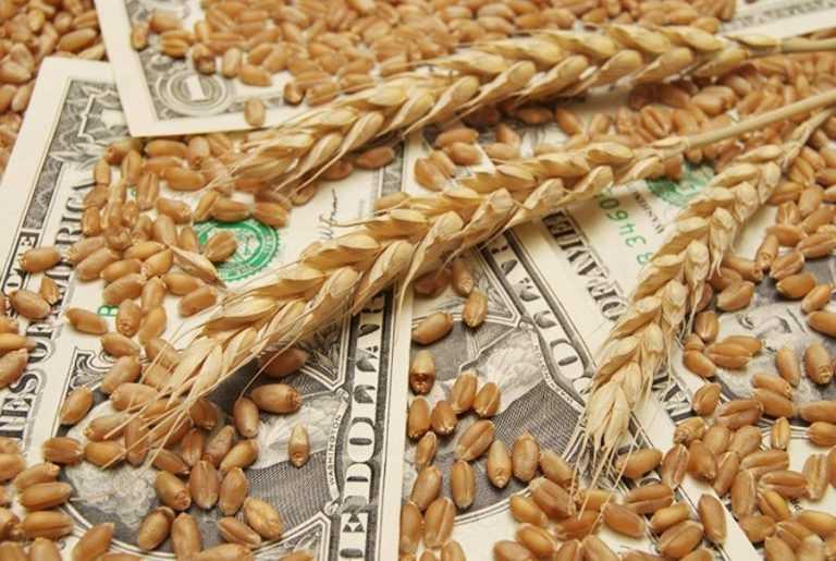 Програма «ALFA Форвард 2021» захищає від ризику зміни ціни на врожай