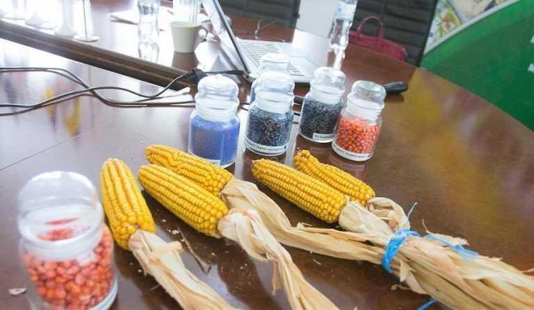 На ринку збільшилася кількість неякісно протруєного насіння