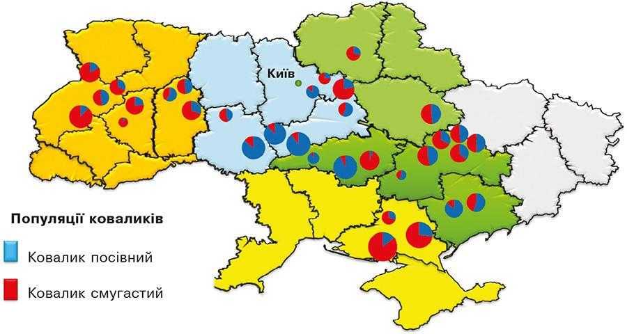 Рис.2. Склад популяції дротяників в Україні