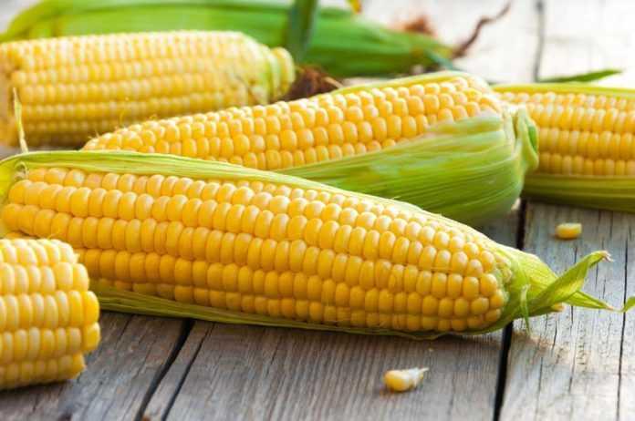 Солодка кукурудза