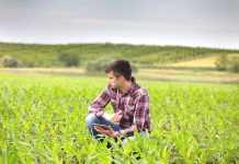 Як дефіцит елементів живлення у рослин пов'язаний зі здоров'ям людини