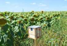 Мікрозаказники – збереження біорізноманіття агроландшафту