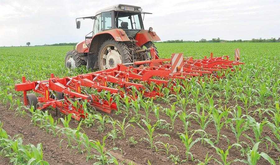 Розпушування міжрядь у посівах кукурудзи доволі ефективне. Внаслідок поширення стійкості до гербіцидів такий контроль бур'янів знову може стати актуальним