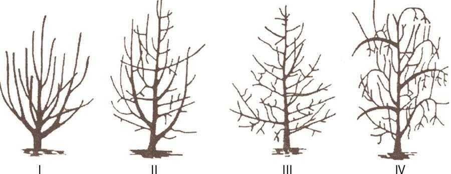 Рис.1.Групування сортів яблуні за типом плодоношення