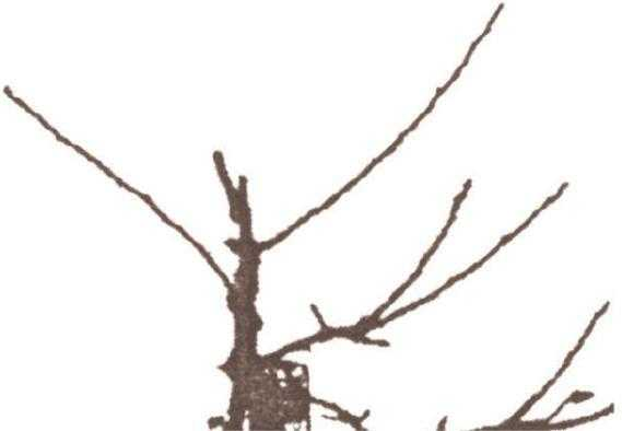 Рис.2.Провідник, обрізаний «на ікло»