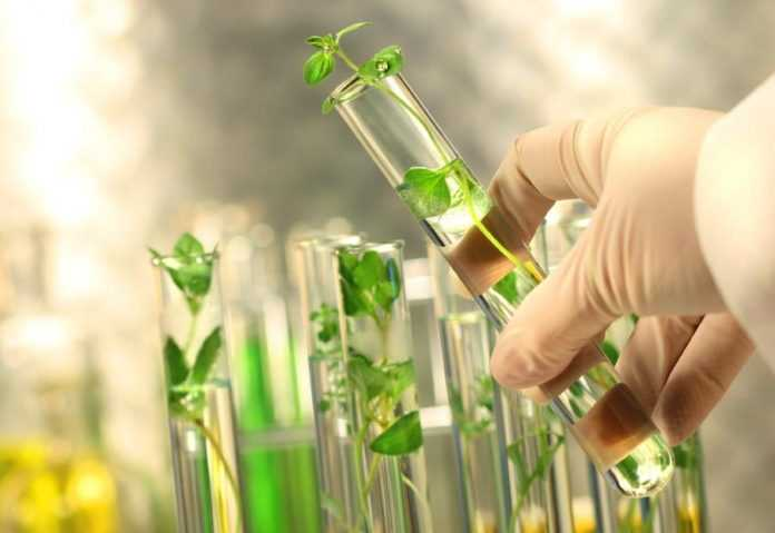 Відкрито новий спосіб отримання сільгоспкультур, стійких до патогенів