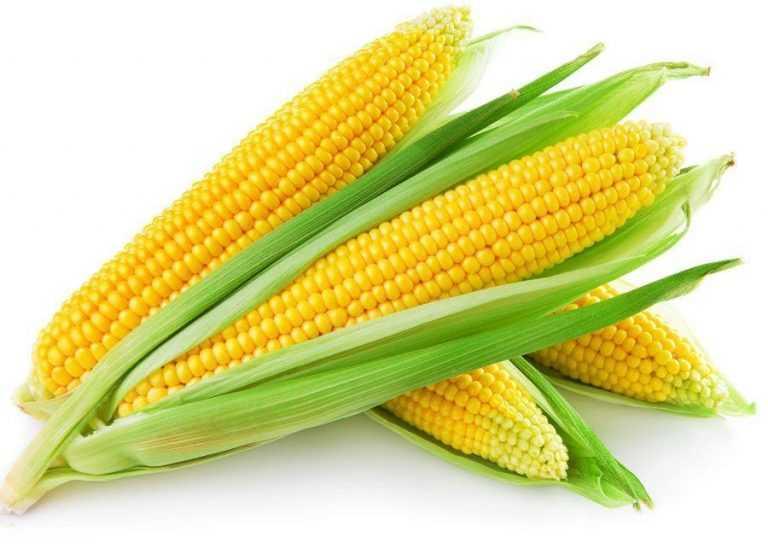 Як отримати високий врожай кукурудзи в агросезоні-2021