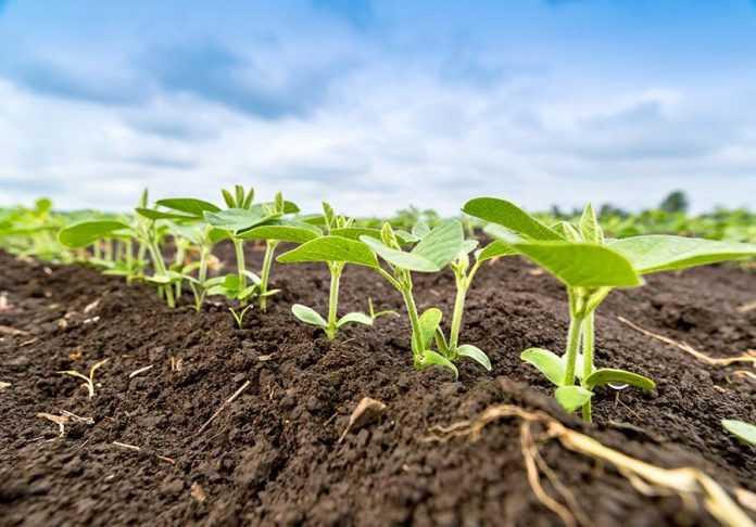 7 правил внесення ґрунтових гербіцидів