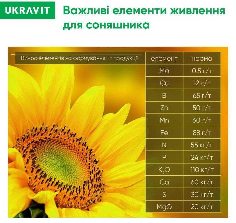 Важливі елементи живлення соняшнику
