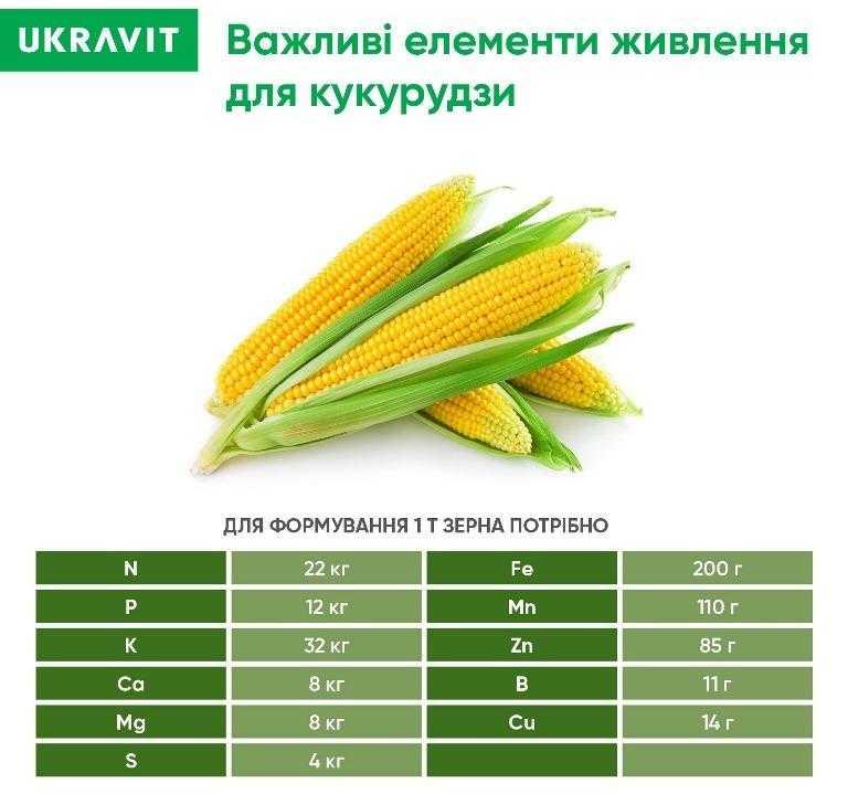Важливі елементи живлення кукурудзи