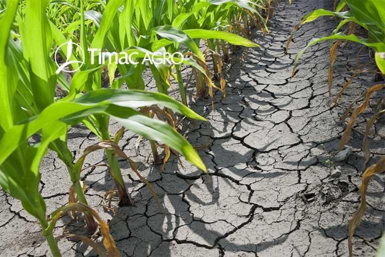 Фосфор для рослин в умовах дефіциту вологи