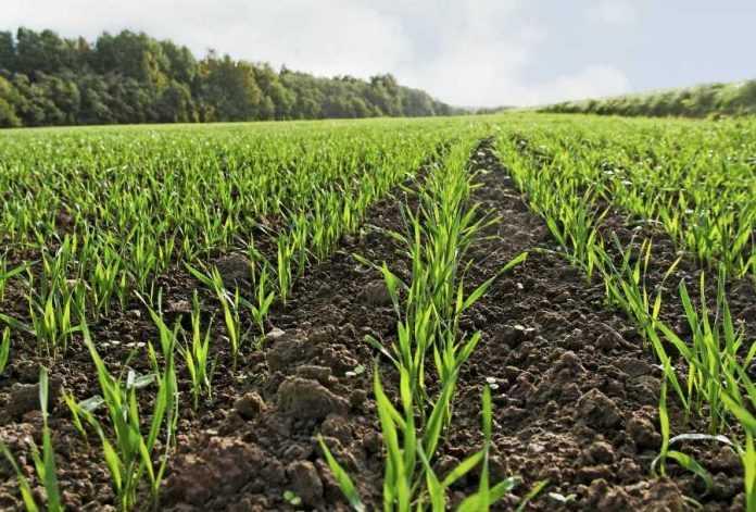 Мікроелементні добрива та стимулятори росту для високої врожайності