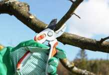 Найпоширеніші помилки при обрізці плодових дерев