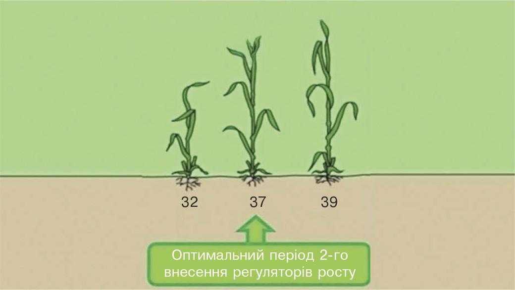 Рис.5. Друге застосування регуляторів росту